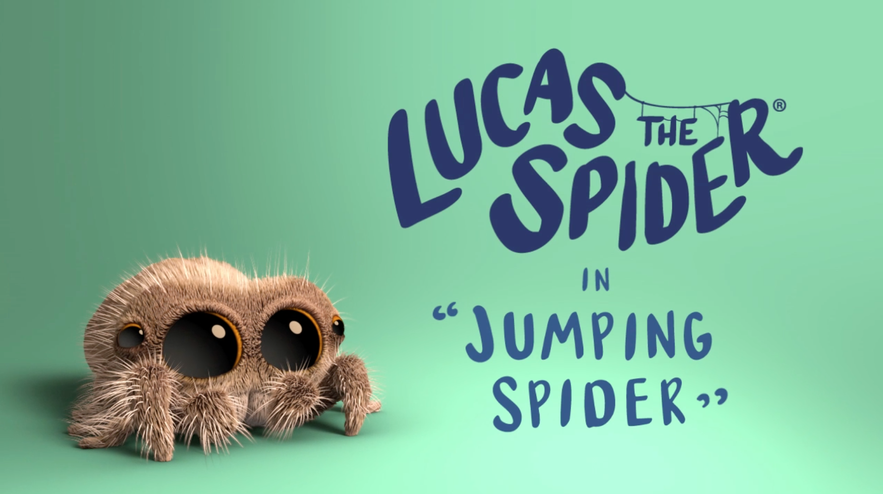 Lucas the Spider - Jumping Spider