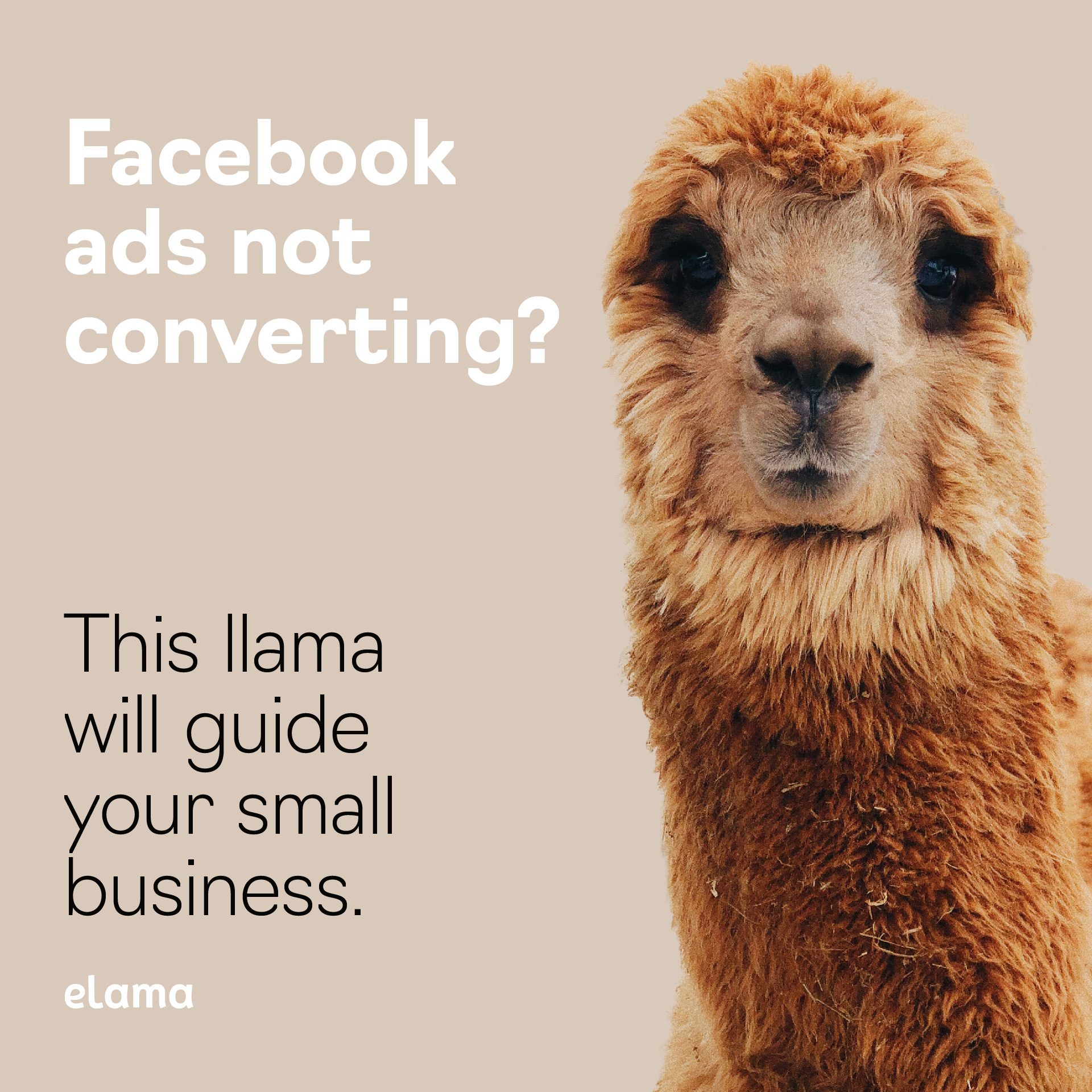 "Ad campaign for eLama - ""This Llama will guide your small business"""