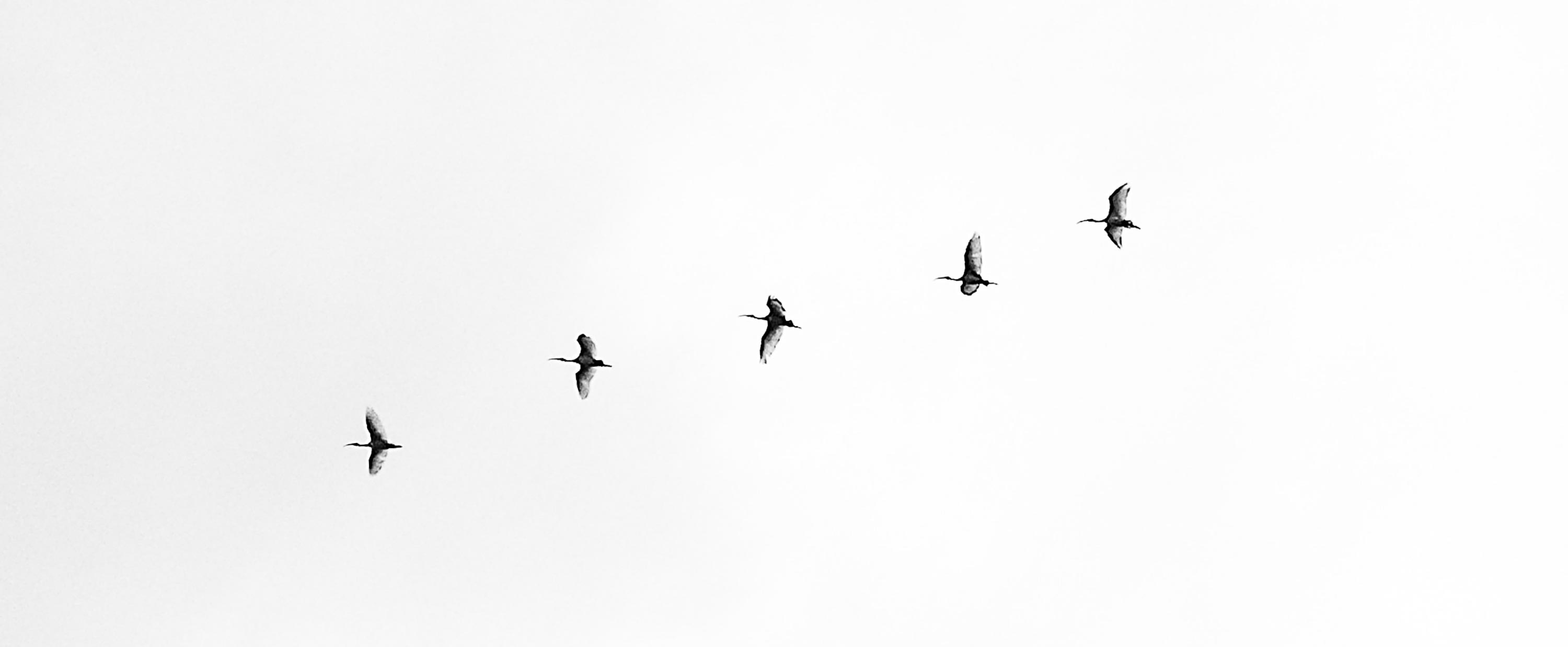 Five birds flying in the sky. Symbolic of the 5 basics of brand startup strategy.
