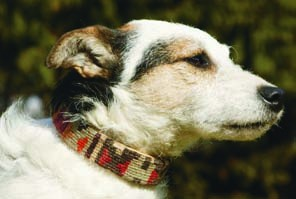 Nomad Ideas Kilim Dog Collars