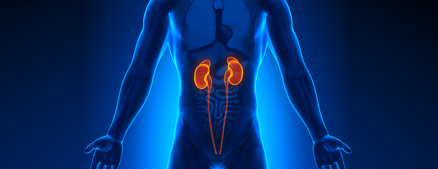 Services offered by Urology Health Solutions in Celebration, FL