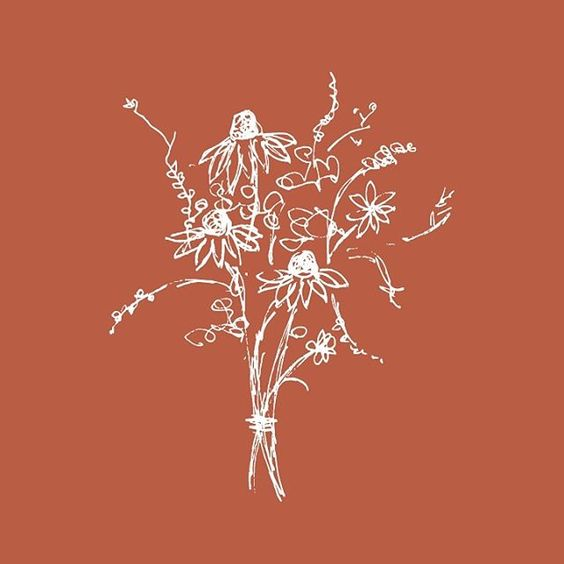 flowers illustration caitlin hottinger