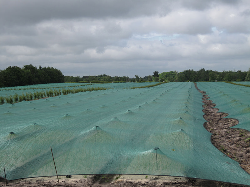 Seedbed Net Protecta 30T