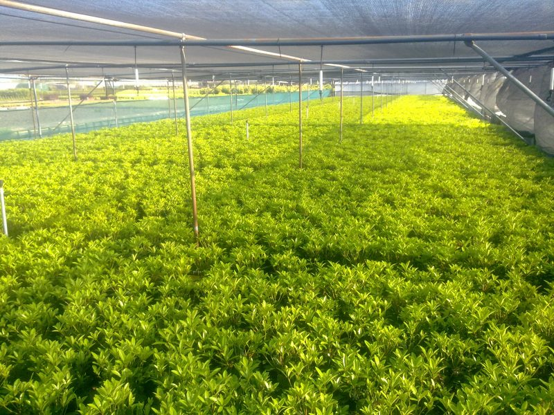 Tree Nursery Net Hexa
