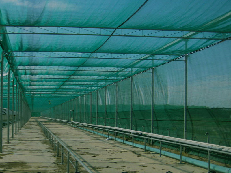 Shade net Avoida 98MMT