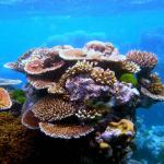Nene Coral reefs