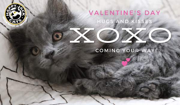 Happy Valentine's Day from Happy Jack Cats!
