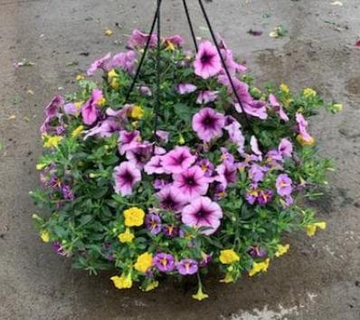Online Plant Sale
