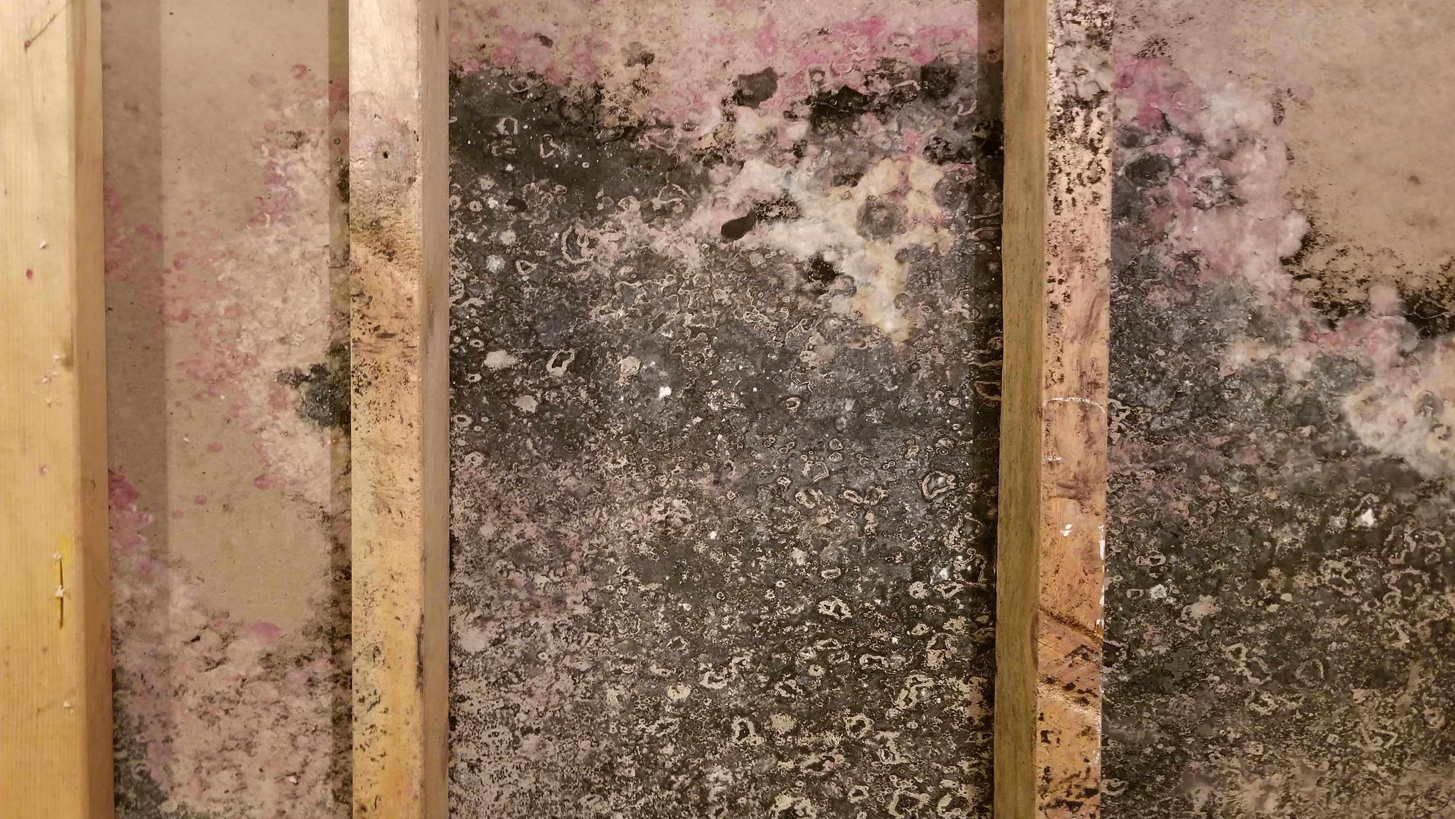 Mold covering wall