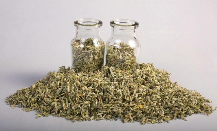 trà damiana - thuốc kích dục nữ