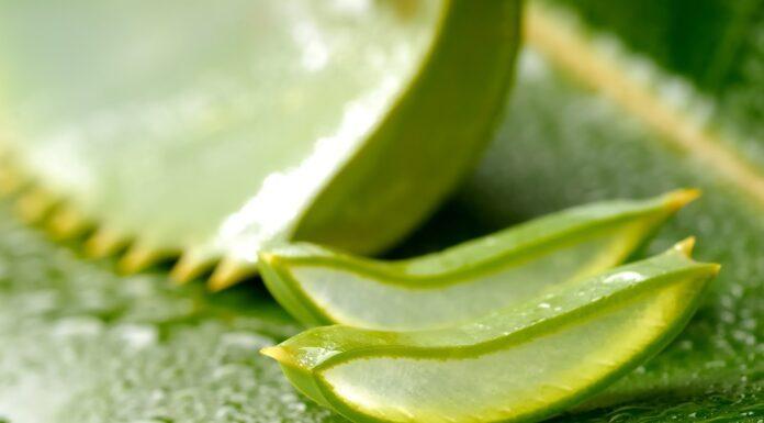 Nha đam có rất nhiều công dụng trong việc dưỡng da. (nguồn: Internet)