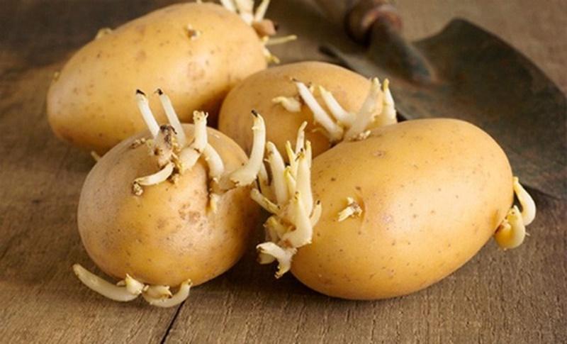 Cách điều trị mụn cóc đơn giản nhờ khoai tây mọc mầm