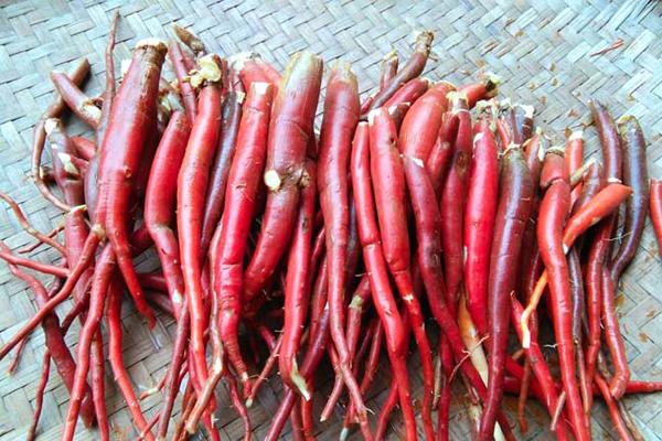 Sâm cau đỏ một trong những vị thuốc được nhiều người tìm đến