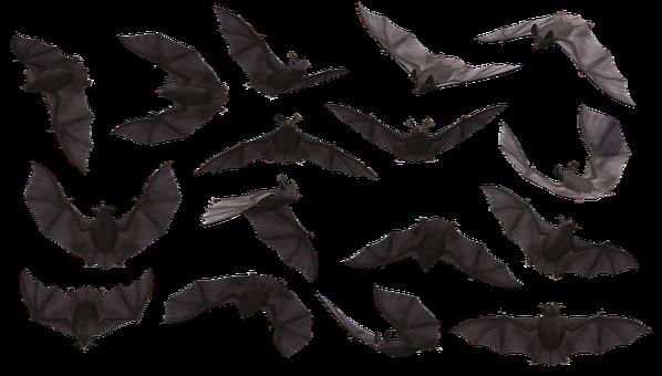 Bat, Dơi, Bay, Động Vật Có Vú, Đáng Sợ