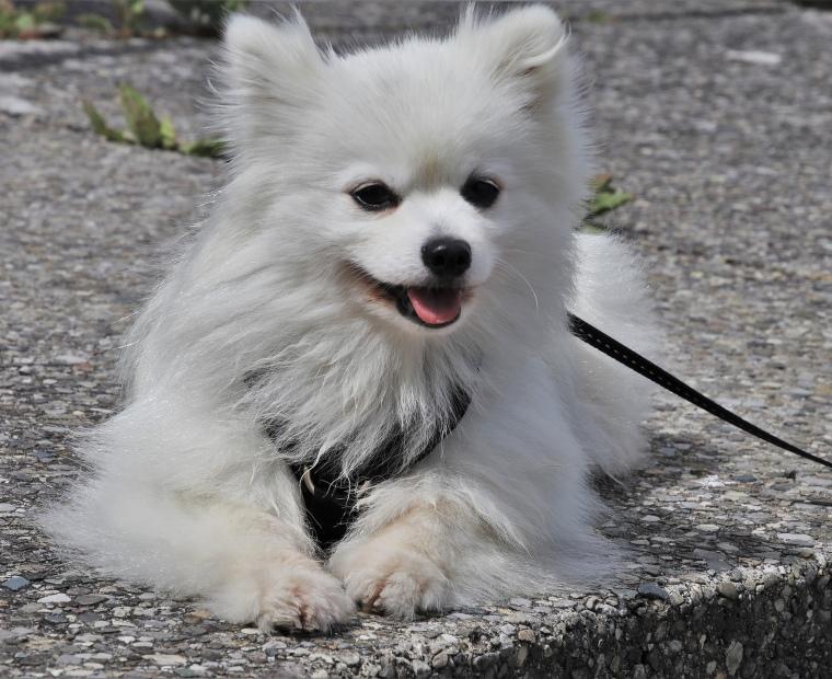Recomendaciones para tener mascotas en condominios