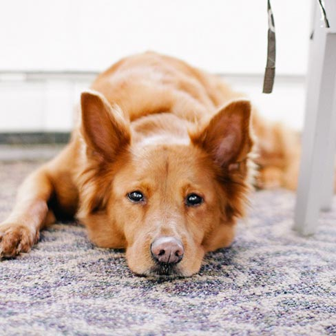 Pet stain treatments.