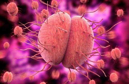 Vi khuẩn bệnh lậu
