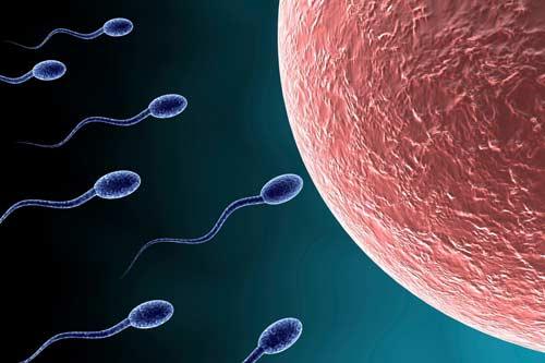 Sau quan hệ bao lâu thì thụ tinh?