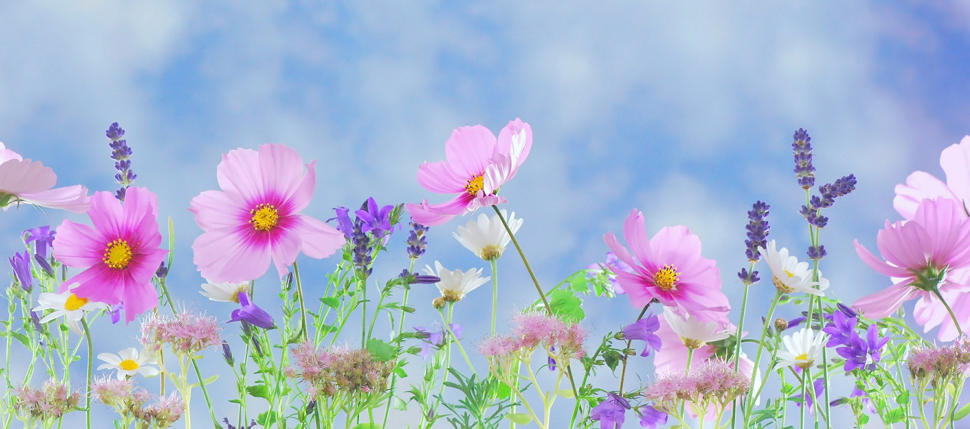 Pink flowers against blue sky background