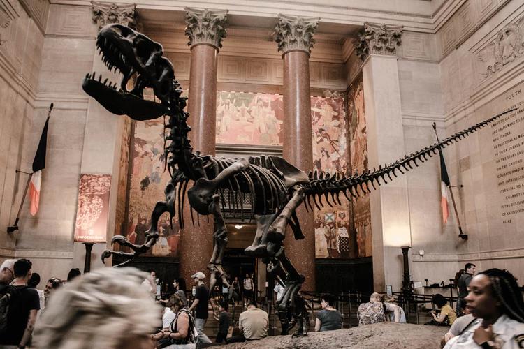 Natural History Museum - Nova York