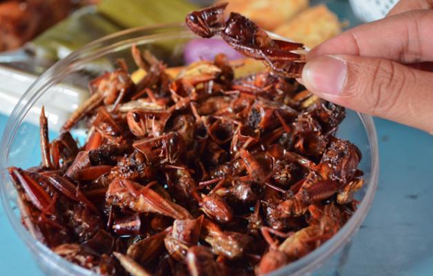 Hasil gambar untuk belalang goreng