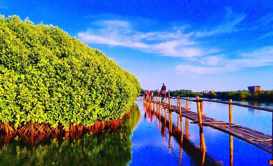 hutan mangrove kulon progo