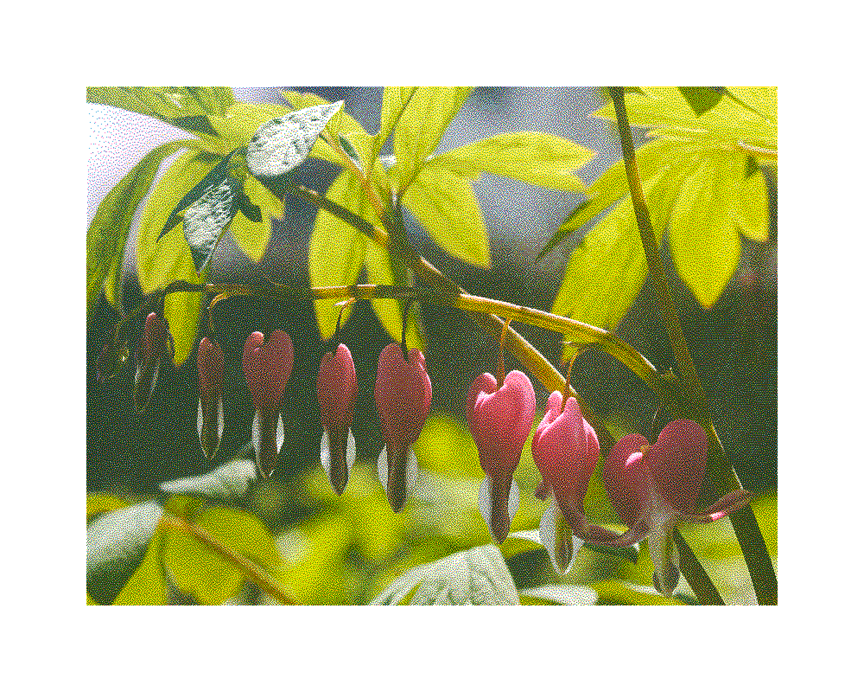 25_plant01