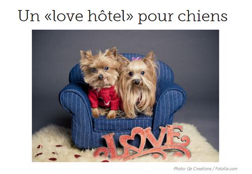 Photo deux chiens sur Canoe.ca