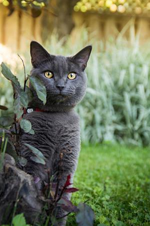 Photo d'un chat à l'extérieur à St-Lambert. Outdoor cat portait.