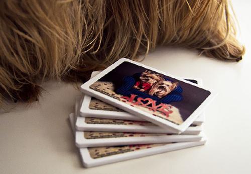 Photo Colo et Mini protège cartes