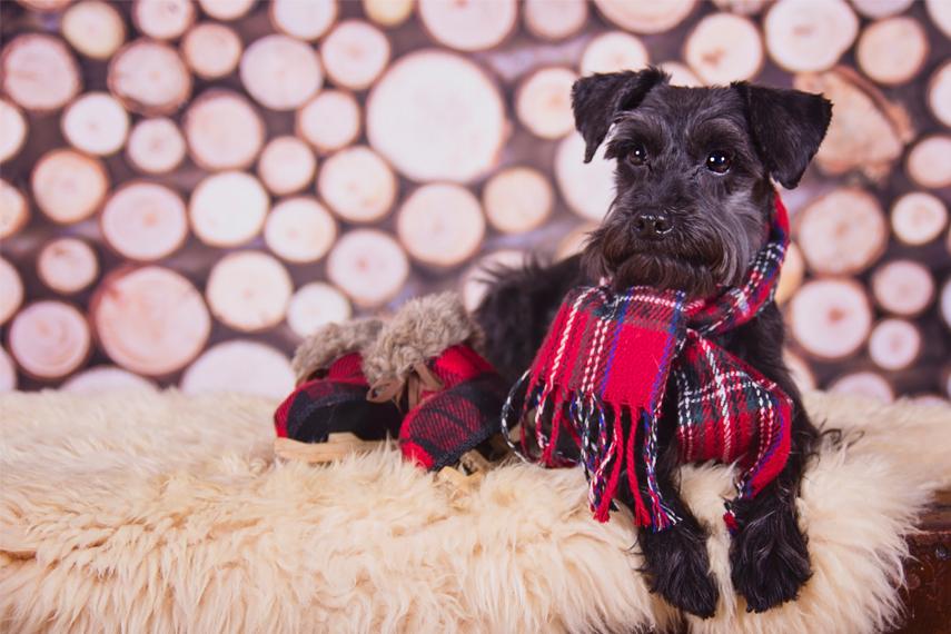 Photo hommage chien berger allemand