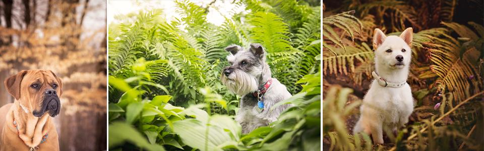 Photos de chiens dans un parc
