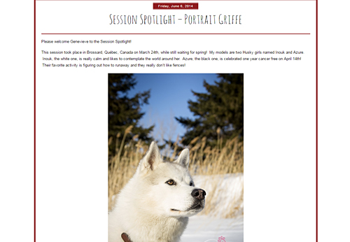 Hair of the dog session en hiver avec chiens husky