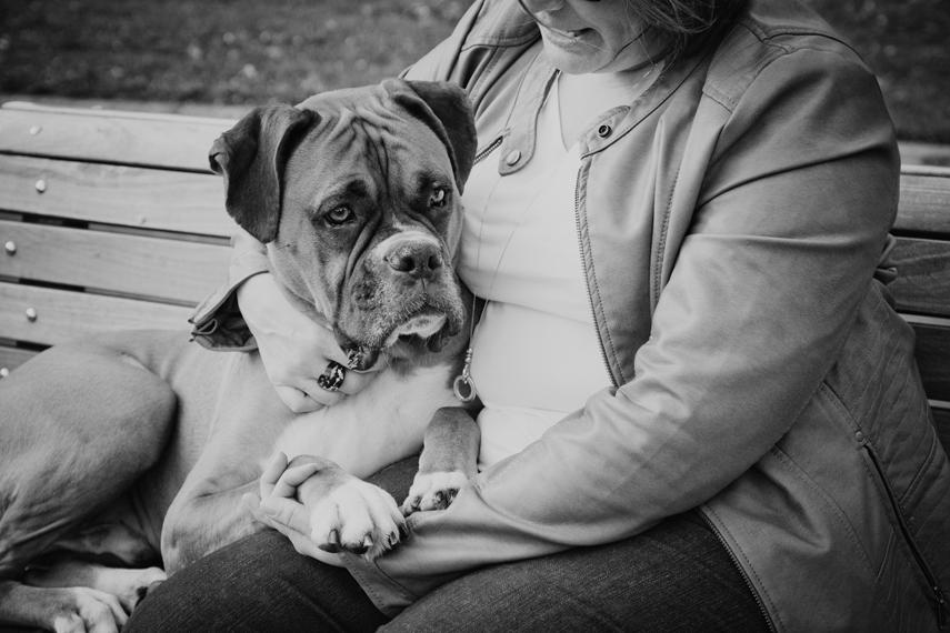Photo chien boxer au parc Angrignon