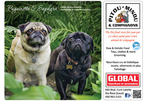 Guardian's Best Animal Rescue Foundation calendrier 2015