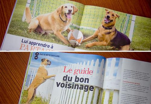 Magazine Animal  photos de chiens