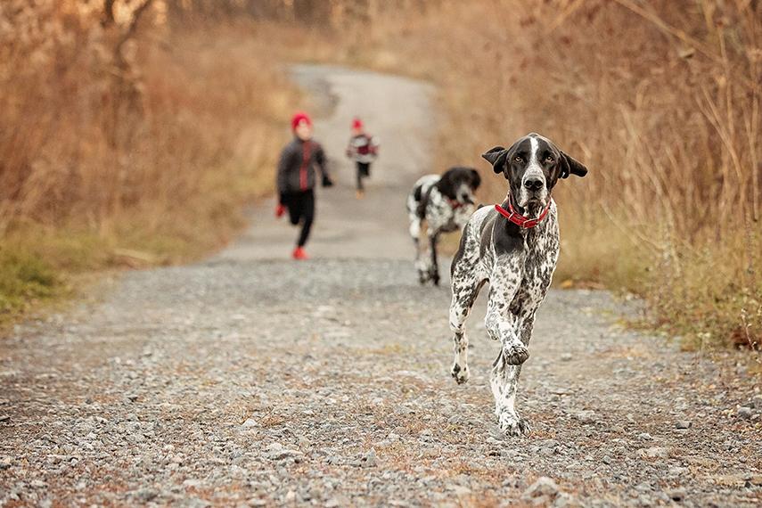 Photo chiens braques et enfants qui courent