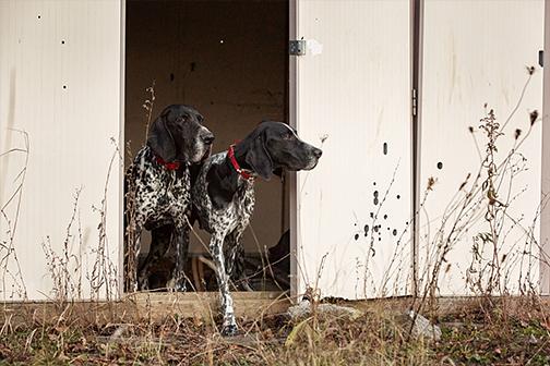 Photo de chiens de chasse