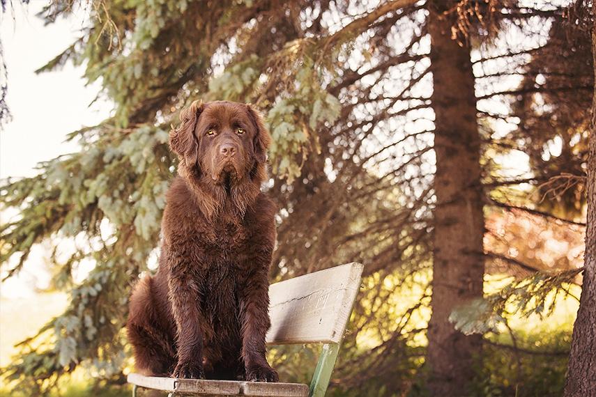 Photo chien Terre-Neuve dans un parc