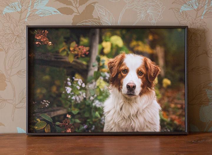 Photo chien avec cadre