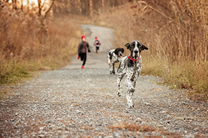 Photo famille et chiens braques