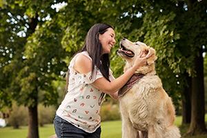 Portrait chien golden retriever