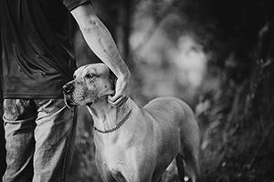 Photo hommage à vieux chien