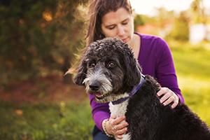 Soin reiki sur un chien