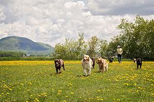 Promeneuse pour chiens