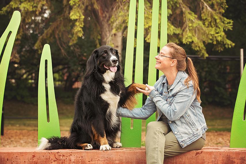 Photo hommage chien golden retriever