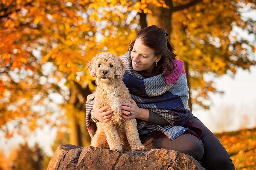Photo goldendoodle à l'automne