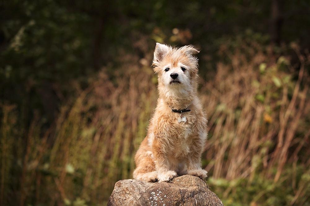 Photo vieux petit chien beige mix