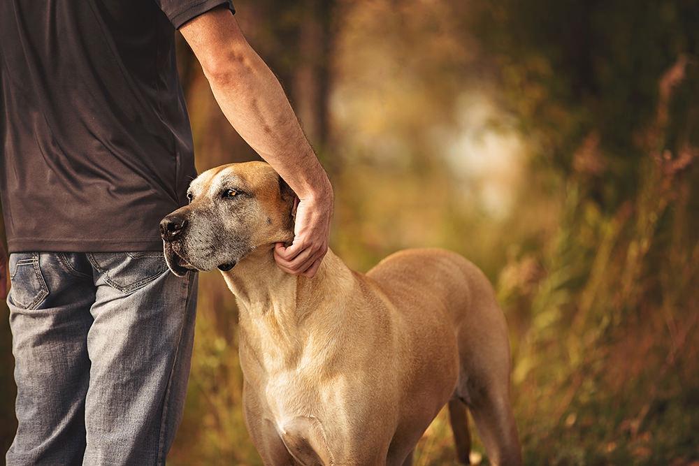 Photo chien âgé brun