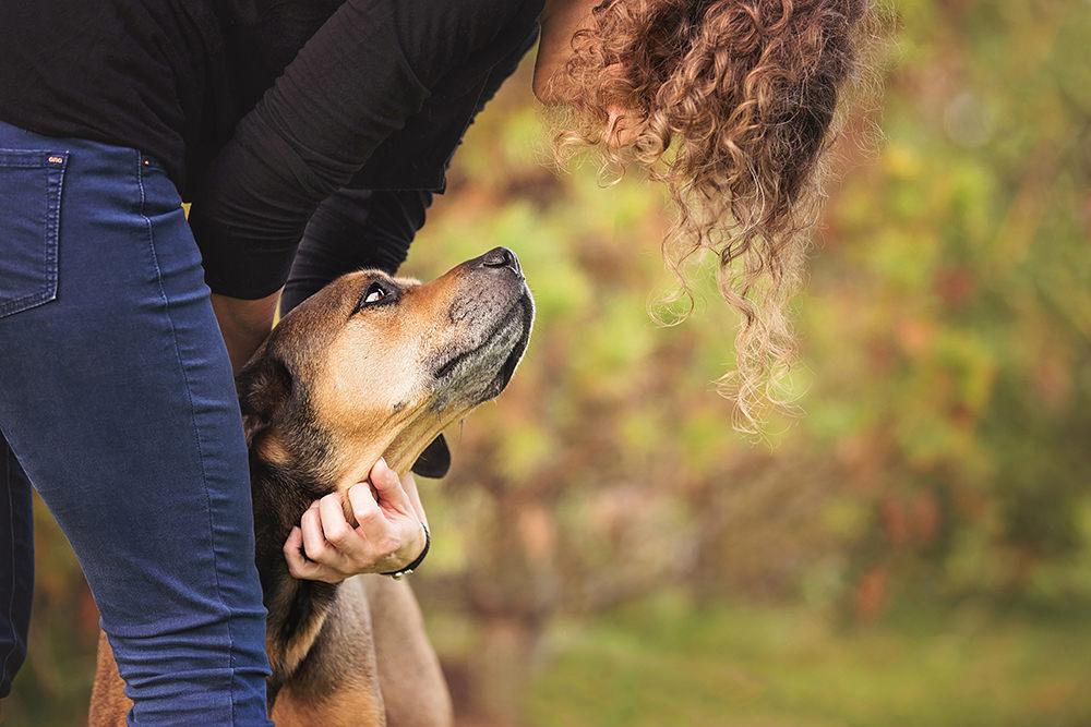 Portrait vieux chien brun mix